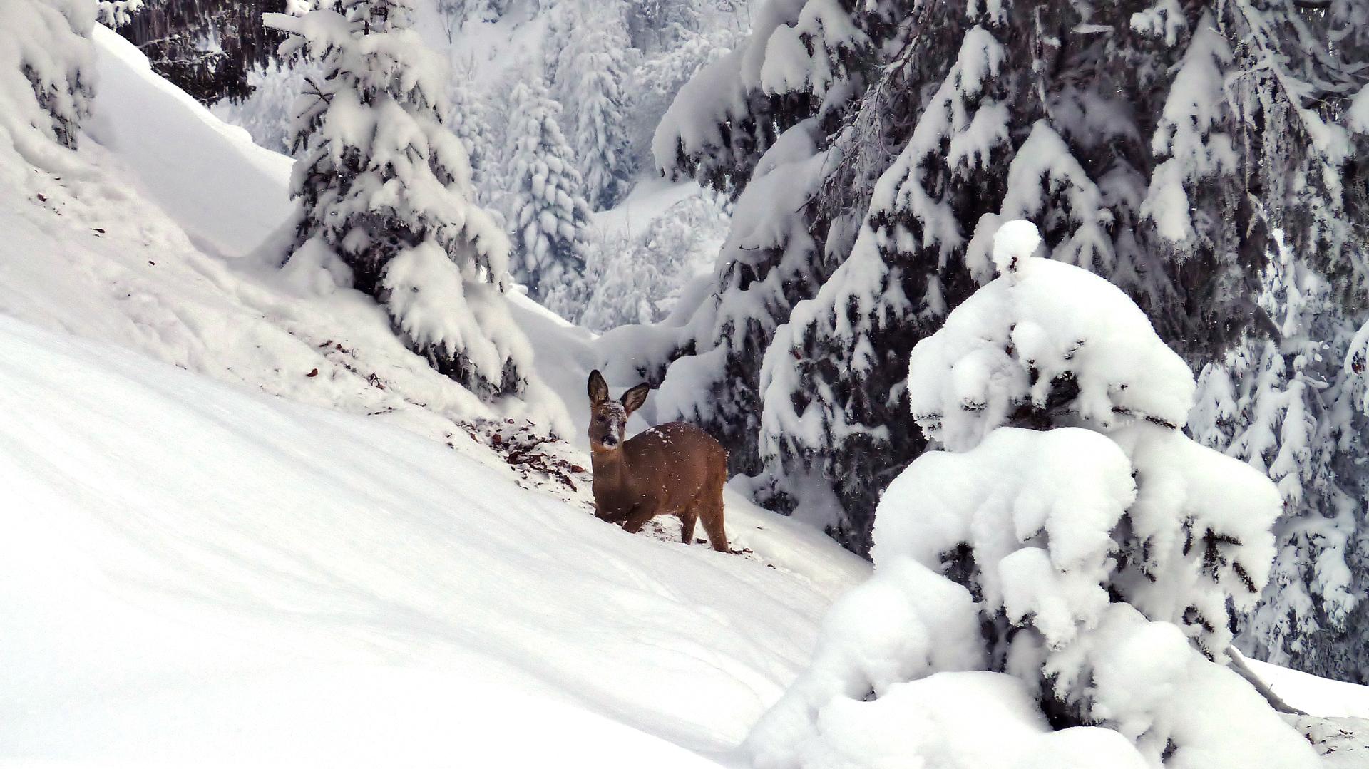 Klettersteig Bälmeten : Sac zindelspitz u2013 jahresprogramm der sektion für freunde bergwelt
